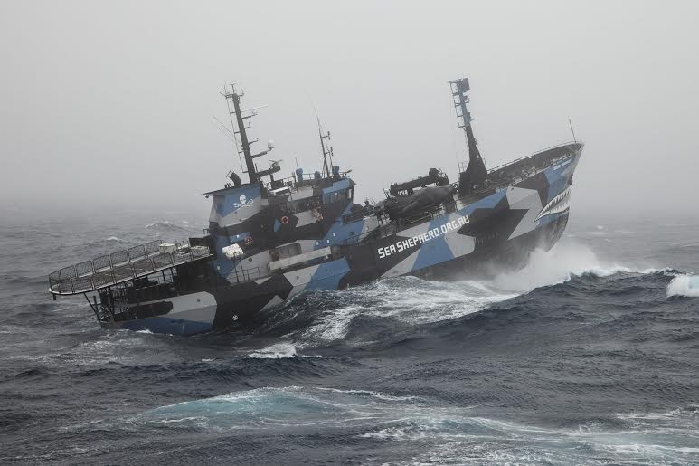 Aboard the Sea Shepherd. Photo credit Sea Shepherd