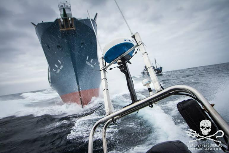 The Sea Shepherd. Photo credit Sea Shepherd.